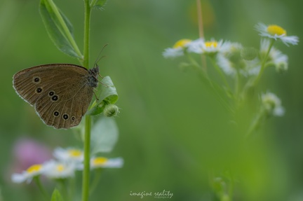 butterfly-in-meadow 19230632943 o